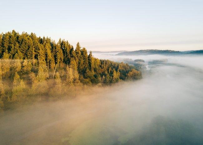 Лес в туманном окружении