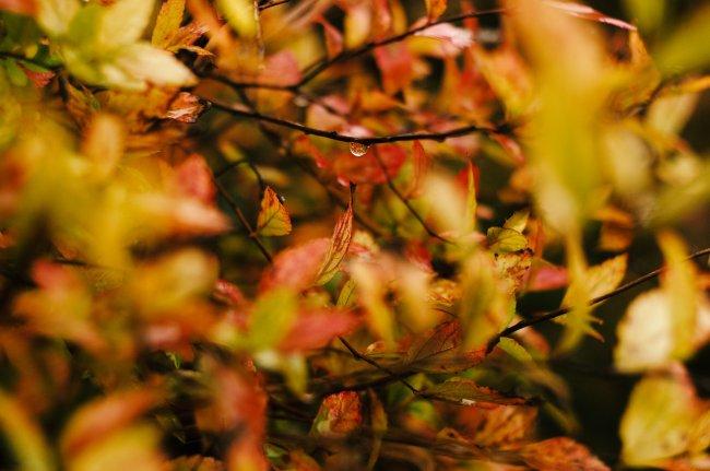 Пожелтевшие листья в каплях дождя