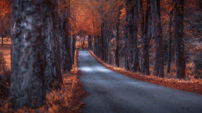 Дорога, по обочинам которой растут осенние деревья