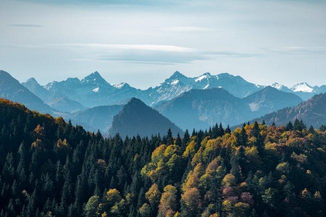 Хвойный лес на фоне снежных гор