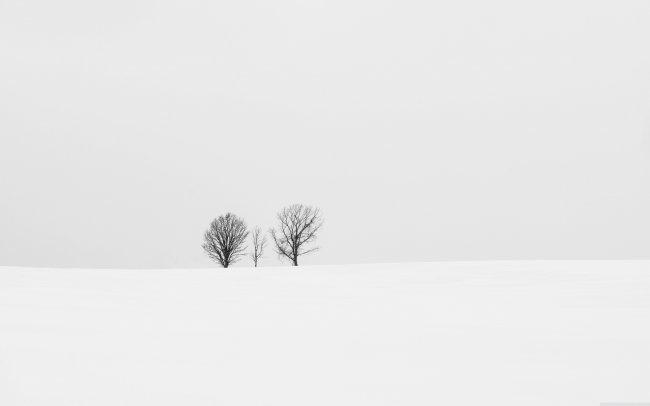 Одинокие зимние деревья, на белом заснеженном поле