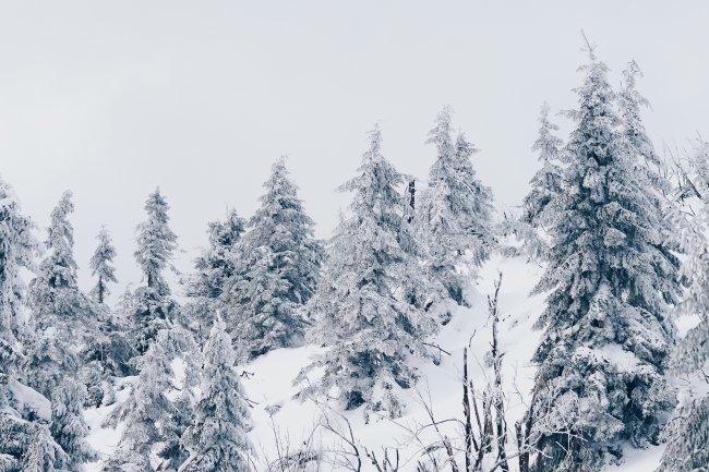 Зимний лес, покрытый снегом