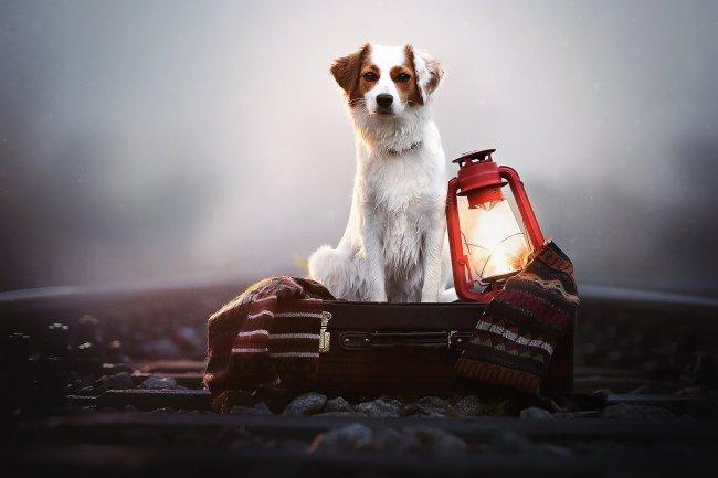 Собака рядом с фонарем на железной дороге