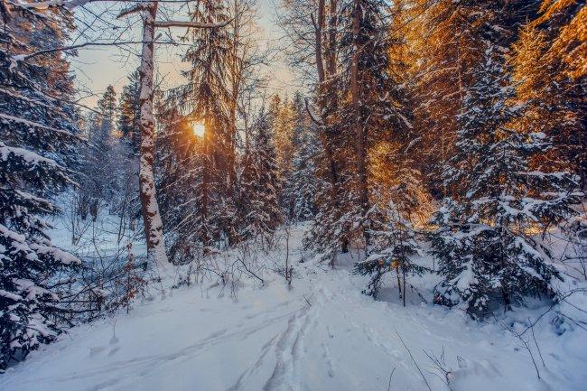 Лучи солнца пробиваются сквозь зимний лес