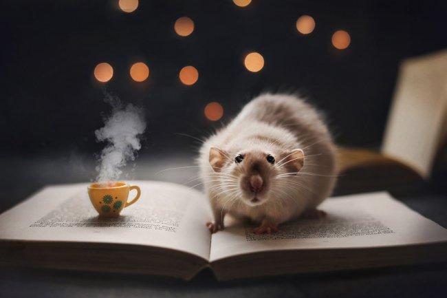 Крыса сидит на странице развернутой книги