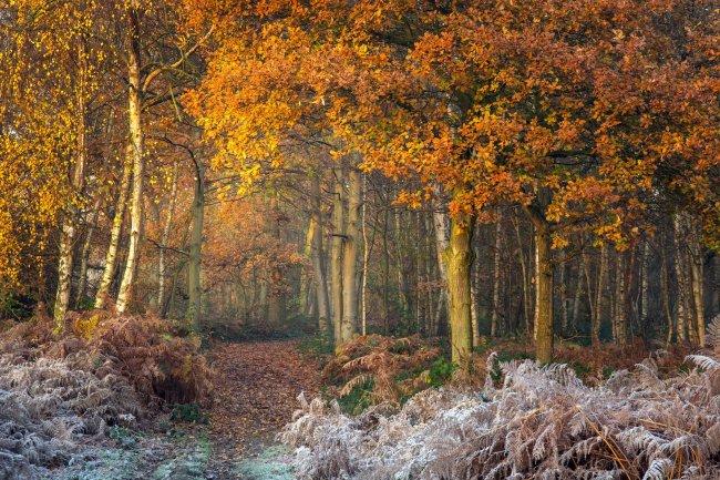 Пешая тропа в осеннем лесу