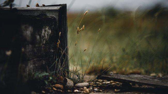 Трава и камни на размытом фоне