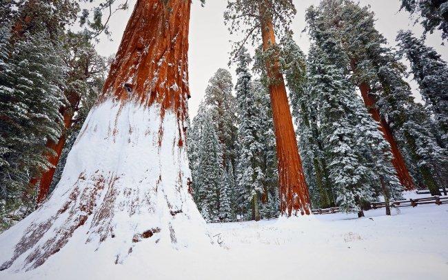 Национальный парк Секвойя, Калифорния, США