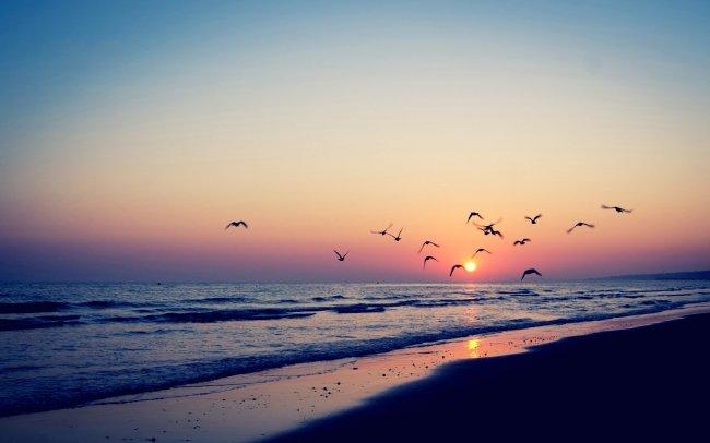 Птицы над морем на фоне заката