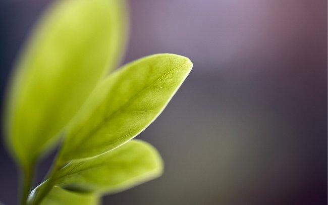 Листья цветов