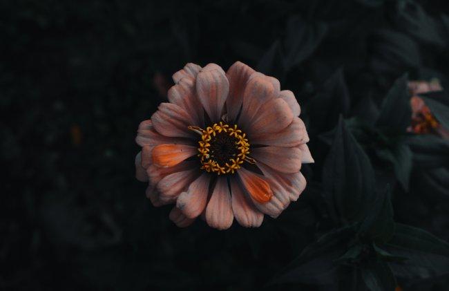 Розово-оранжевый цветок by David von Diemar