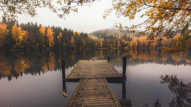 Вид с причала на живописный осенний лес