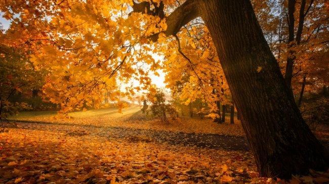 Золотой октябрь