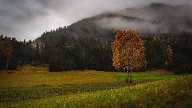 Туман над осенним хвойным лесом