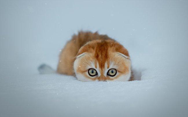 Рыжий котенок в снегу
