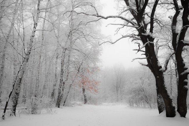 Природный парк Кумысная поляна, Саратов, Россия