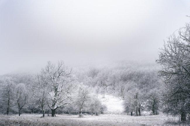 Деревья стоят в снегу среди заснеженной земли