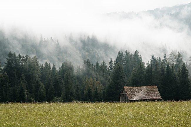 Старый сарай возле леса, скрытый в тумане