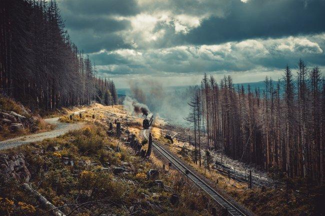 Живописный железнодорожный путь сквозь хвойный лес
