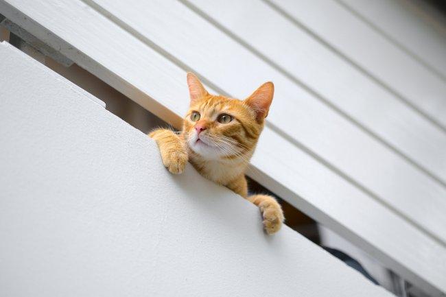Рыжий кот выглядывает в небольшой горизонтальный проем